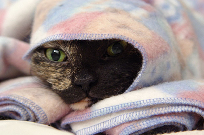how to remove pet hair from fleece blanket