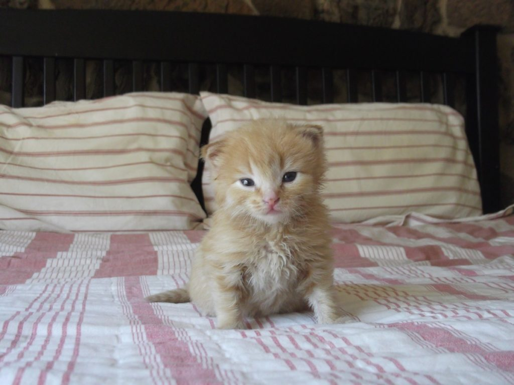 Why do cats pee on the bed