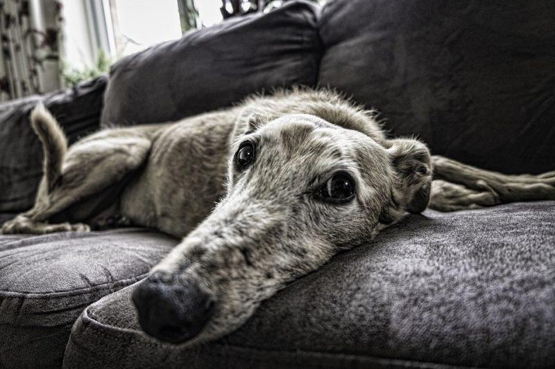 How To Keep Dog Off Sofa