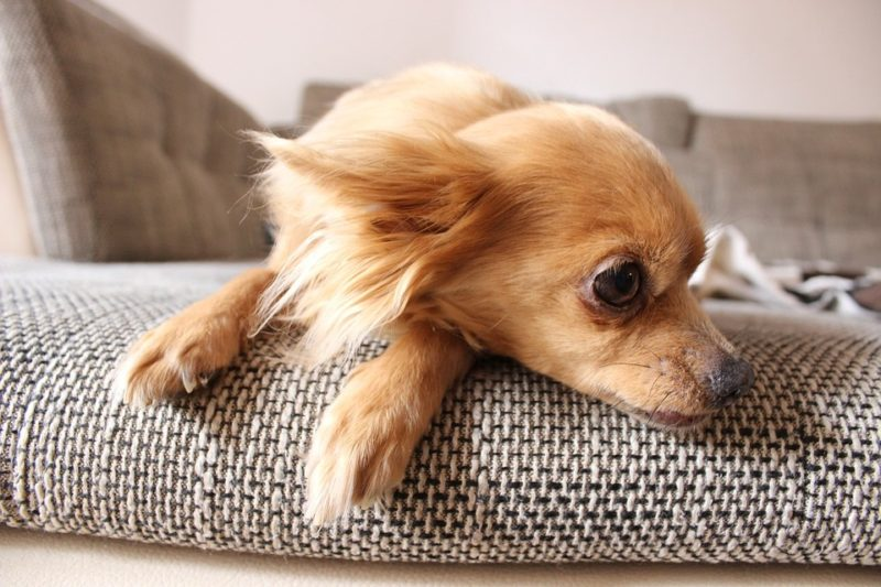 how to protect sofa from dog