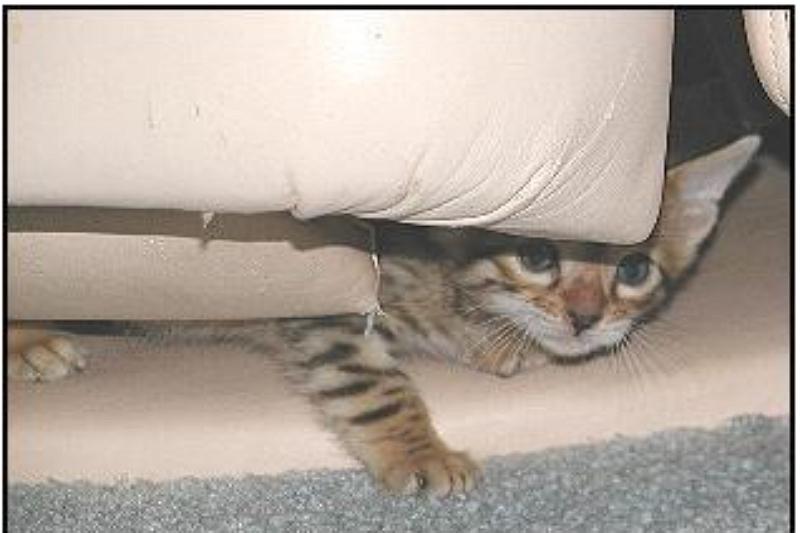 Keeping Kitten from Going Under a Recliner