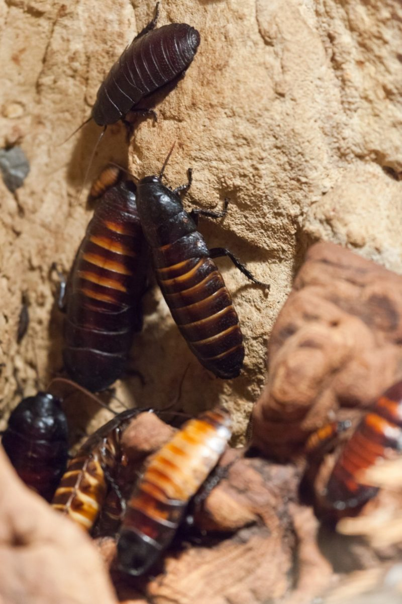 what smells do bed bugs hate