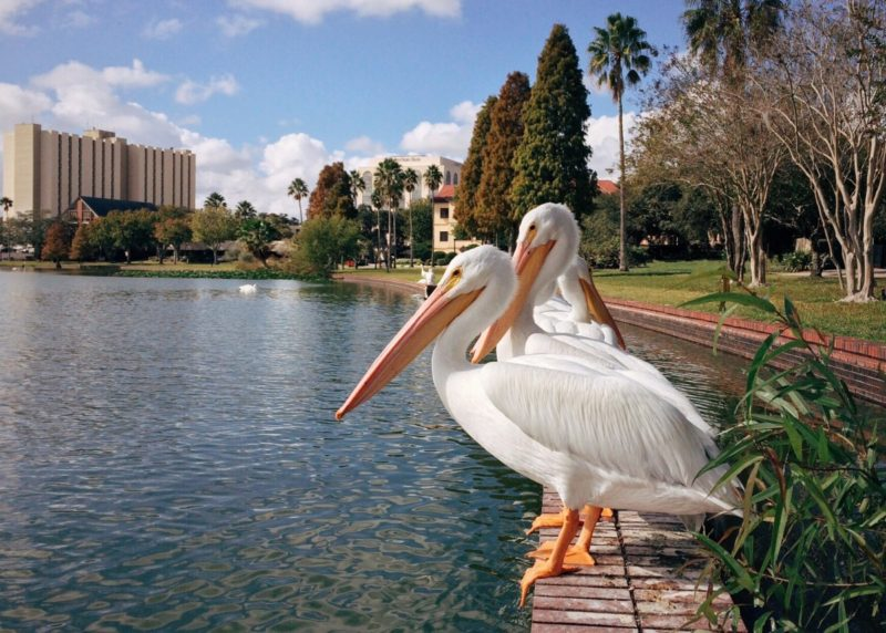 Who pays for title insurance in Florida