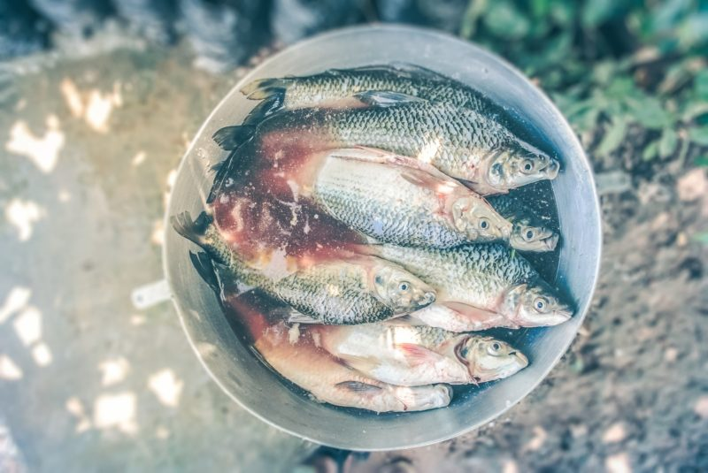 how to get fish smell out of fridge
