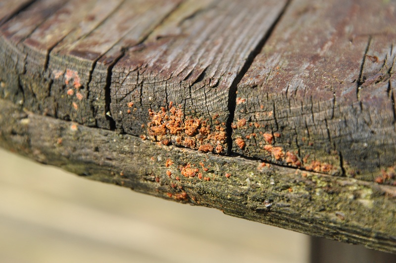 how to remove mold from unfinished wood
