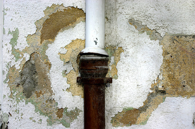 how to remove mold from water damage