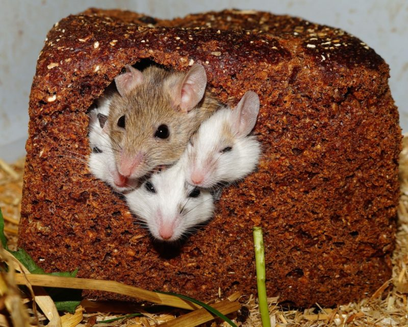 how to keep mice out of stove